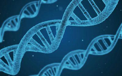 Risikofaktor Nr. 7: GENETIK